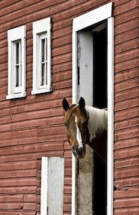 Horse Watching Barn